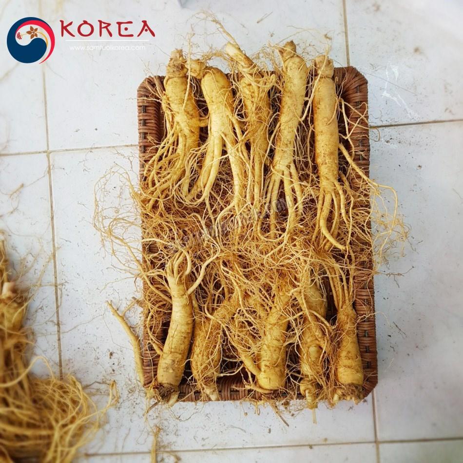Sâm tươi Hàn Quốc 10 củ 1 kg, nhân sâm tươi