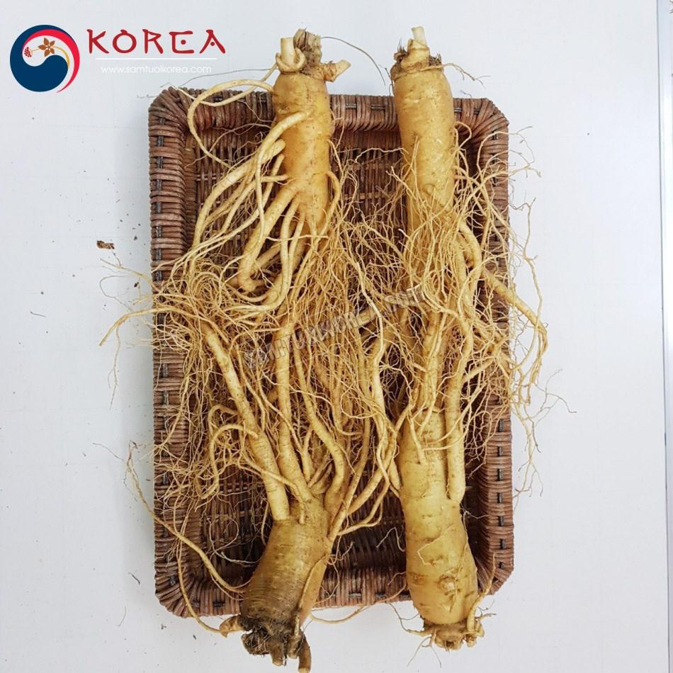 Sâm tươi Hàn Quốc 4 củ 1 kg