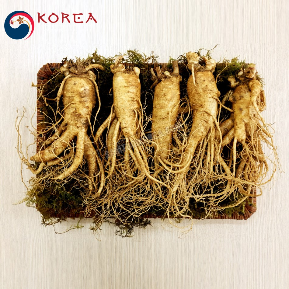 Sâm tươi Hàn Quốc 5 củ 1 kg, sâm tươi ngâm rượu, sâm tươi làm quà biếu