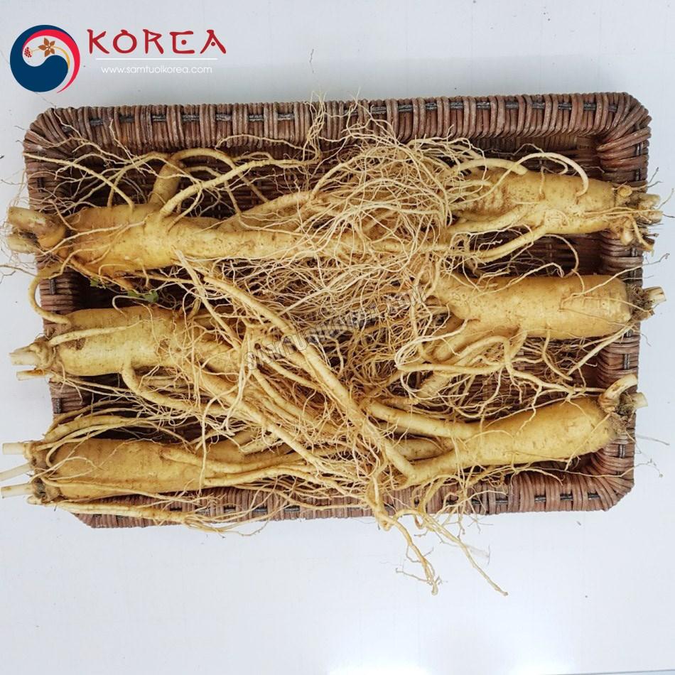 Sâm tươi Hàn Quốc 6 củ 1 kg , sâm tươi nguyên củ, sâm hàn quốc