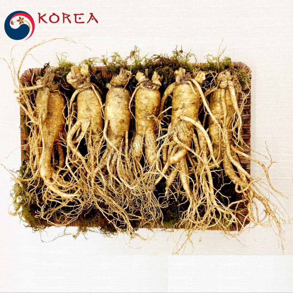 Sâm tươi Hàn Quốc 6 củ 1 kg, sâm tươi nguyên củ