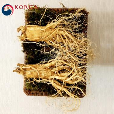 Sâm tươi Hàn Quốc 2 củ 1 kg